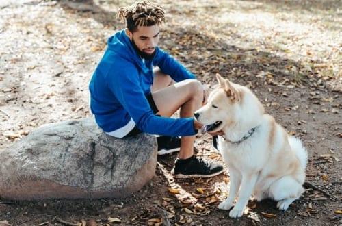 Dog commands - imperative